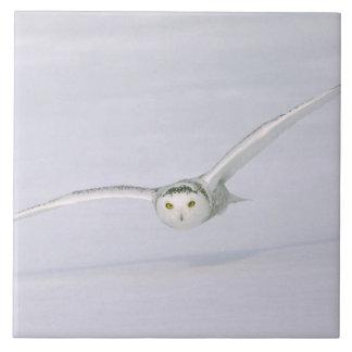 カナダ、ケベック。 Snowyのフクロウは雪に低く飛びます タイル