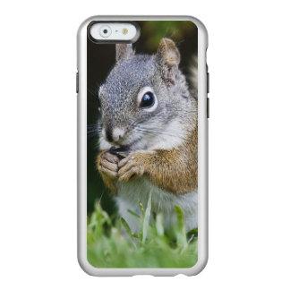 カナダ、ブリティッシュ・コロンビアのアカリスのマツ INCIPIO FEATHER SHINE iPhone 6ケース
