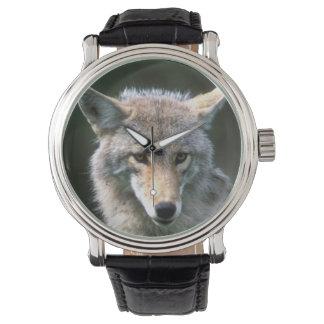 カナダ、ブリティッシュ・コロンビアのコヨーテ(イヌ属のlatrans) 腕時計
