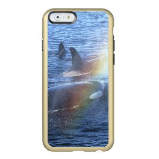 カナダ、ブリティッシュ・コロンビア、まっすぐのJohnstone、 Incipio Feather Shine iPhone 6ケース