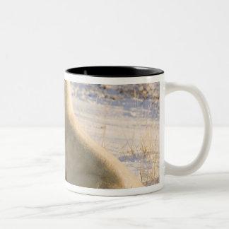 カナダ、マニトバのハドソン湾、Churchill。 3 ツートーンマグカップ
