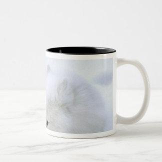 カナダ、マニトバ、Churchill。 Artic孤との ツートーンマグカップ