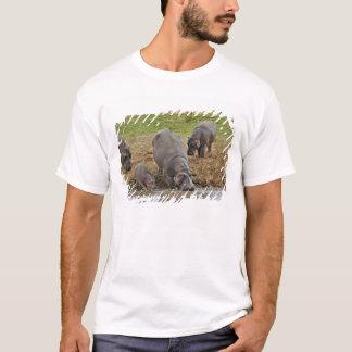 カバ、カバのamphibius、Serengeti Tシャツ