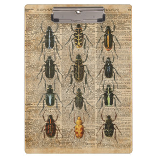 カブトムシの虫の動物学のヴィンテージの絵の芸術 クリップボード