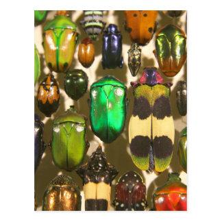 カブトムシ、虫および昆虫 ポストカード