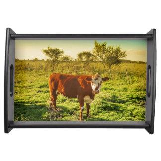 カメラに直面する草原の孤独な牛 トレー
