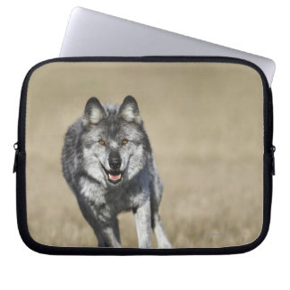 カメラの方のオオカミ(イヌ属ループス)のランニング ラップトップスリーブ