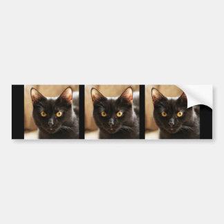 カメラの目をよく見ている黒猫 バンパーステッカー