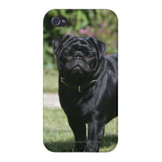 カメラを見ます立つ黒いパグ iPhone 4/4Sケース