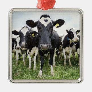 カメラを見ます続けて立っている牛 メタルオーナメント