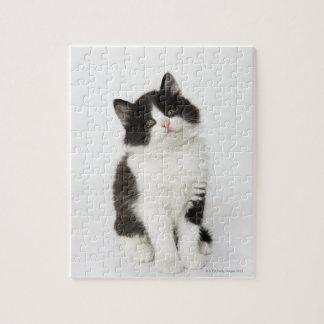 カメラ若い子ネコの着席の検討 ジグソーパズル