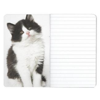 カメラ若い子ネコの着席の検討 ポケットジャーナル