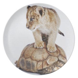 カメ、白い背景に立っているベビーのライオン ディナー皿