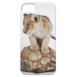 カメ、白い背景に立っているベビーのライオン iPhone SE/5/5s ケース