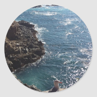 カモメのペリカンのビーチのメキシコティフアナのgeiser ラウンドシール