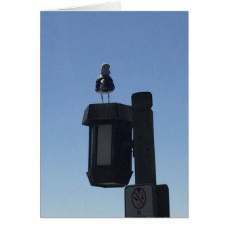 カモメの眺望 カード