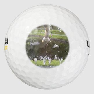 カモメを飛ばしている猫 ゴルフボール