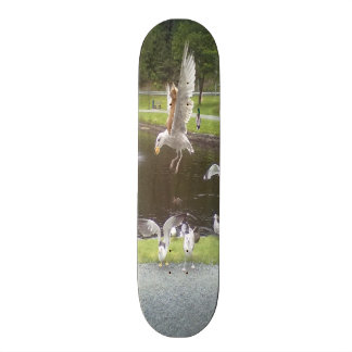 カモメを飛ばしている猫 20CM スケートボードデッキ