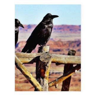 カラスのワタリガラスの鳥の黒 ポストカード