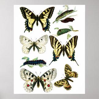 カラフルなアゲハチョウの蝶、幼虫及びガ ポスター
