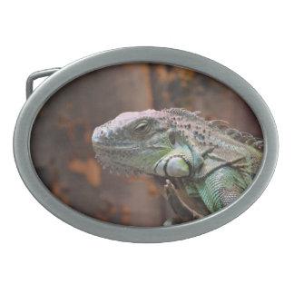 カラフルなイグアナのトカゲが付いているベルトの留め金 卵形バックル
