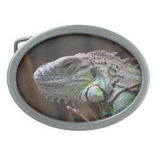 カラフルなイグアナのトカゲの頭部が付いているベルトの留め金 卵形バックル
