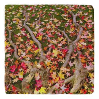 カラフルなカエデの葉 トリベット