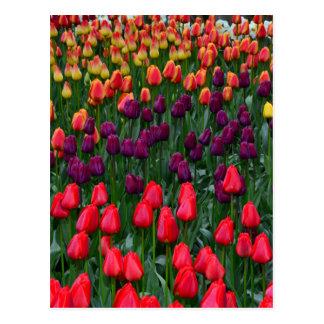 カラフルなチューリップの花園 ポストカード