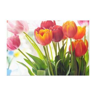 カラフルなチューリップの花 キャンバスプリント