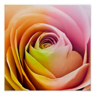 カラフルなバラの花びらの閉めて下さい ポスター