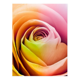 カラフルなバラの花びらの閉めて下さい ポストカード