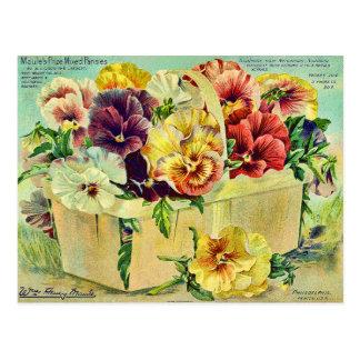 カラフルなパンジーによってはヴィンテージの種の包みカバーが開花します ポストカード