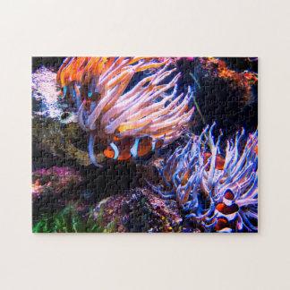 カラフルなピエロの魚 ジグソーパズル