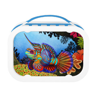 カラフルなマンダリンのハゼの魚のランチボックス ランチボックス