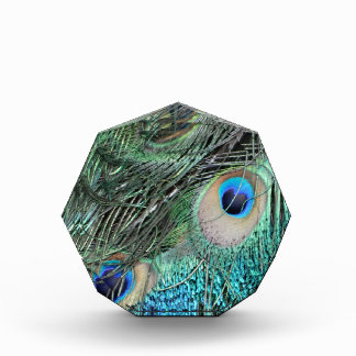 カラフルな孔雀の目 表彰盾