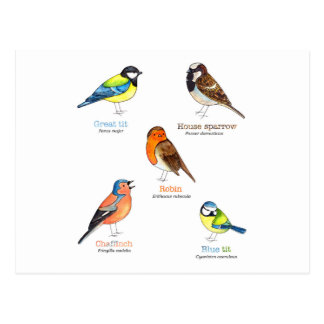 カラフルな庭の鳥 ポストカード