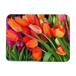 カラフルな春のチューリップのプリントの磁石 マグネット