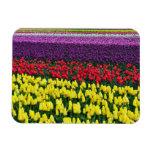 カラフルな春のチューリップの磁石 柔らかいマグネット