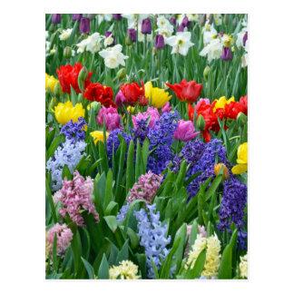 カラフルな春の花園 ポストカード