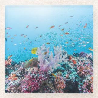 カラフルな礁および珊瑚とのスキューバダイビング ガラスコースター