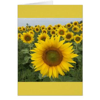 カラフルな花の黄色いヒマワリの収穫 カード