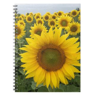カラフルな花の黄色いヒマワリの収穫 ノートブック