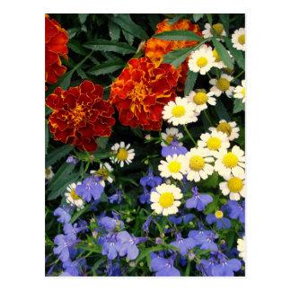カラフルな花壇 ポストカード