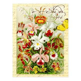 カラフルな蘭および黄色い蝶 ポストカード