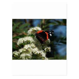 カラフルな蝶 ポストカード