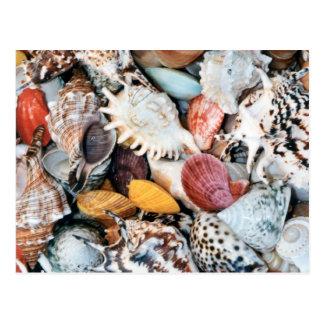 カラフルな貝およびムラサキ貝 ポストカード