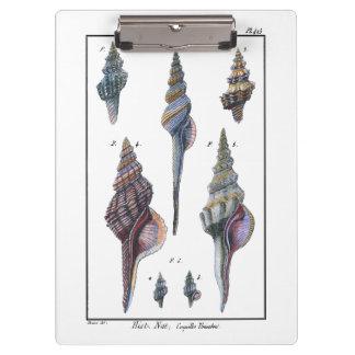 カラフル7つの貝殻