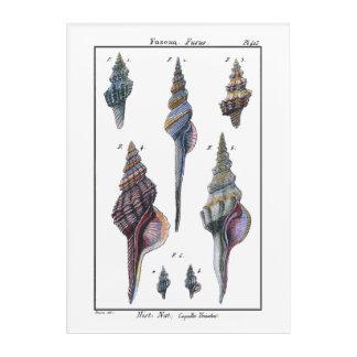 カラフル7つの貝殻 アクリルウォールアート