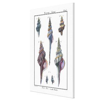カラフル7つの貝殻 キャンバスプリント