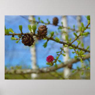 カラマツの花 ポスター